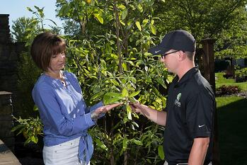 Lawn care companies can cross-sell tree care services easily with proactive visits.
