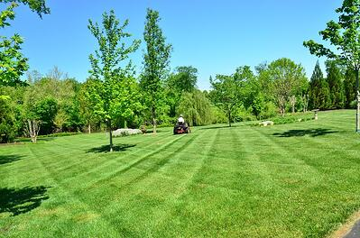 Learn six on-page SEO tips for your landscaping and lawn care website.