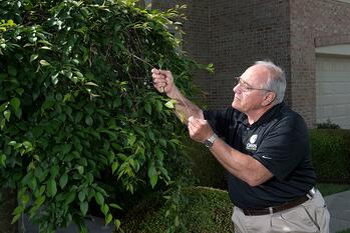 Creating a team lead program is a great tree service marketing idea.